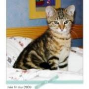 JUNIOR - M - Né fin mai 2009 - Adopté en décembre 2009