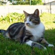 DARCY - F - Née en mars 2008 - Adoptée en décembre 2009
