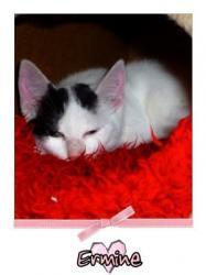 ERMINE - F - Née le 20 juin 2009 - Adoptée en décembre 2009