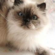 POESIE - F - Née le 28/03/1999 - Adoptée en octobre 2010.