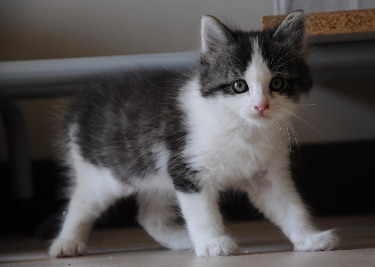 IOCHI - M - Né le 10/03/2013 - Adopté en Juin 2013