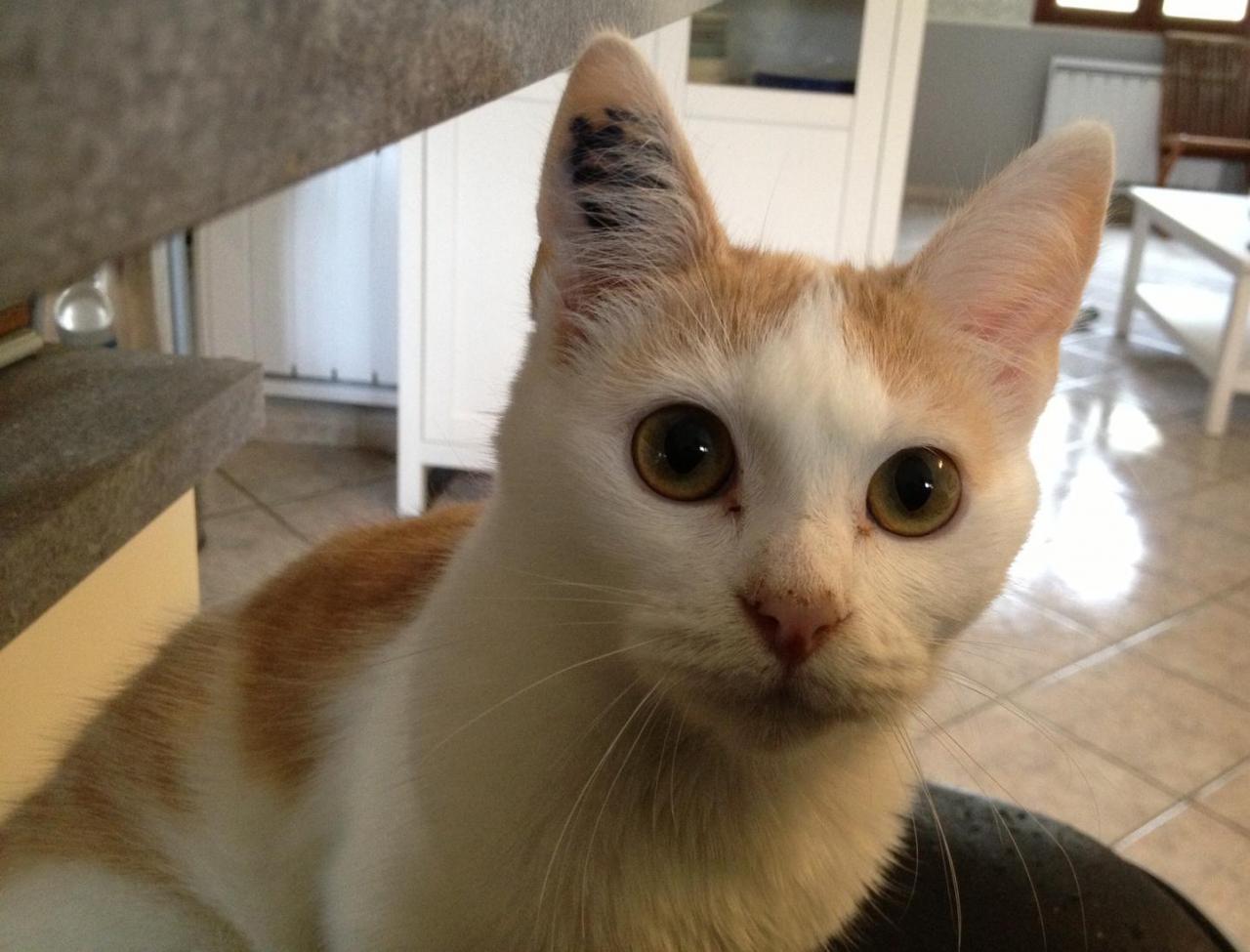 IROKO - M - Né le 18/04/2013 - Adopté en Decembre 2013
