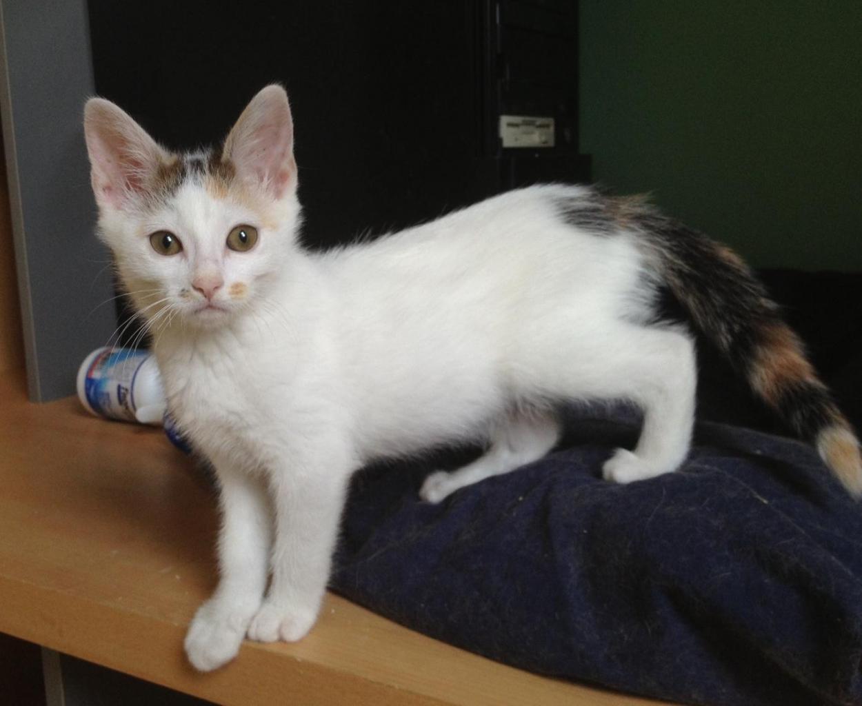 ISADORA - Née le 21/04/2013 - Adoptée en Fevrier 2014