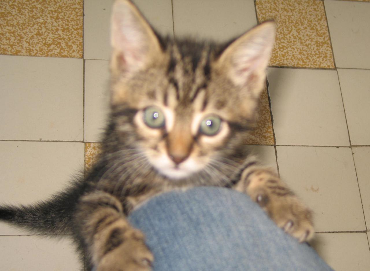 ITCHIGO - M - Né le 25/03/2013 - Adopté en Aout 2013