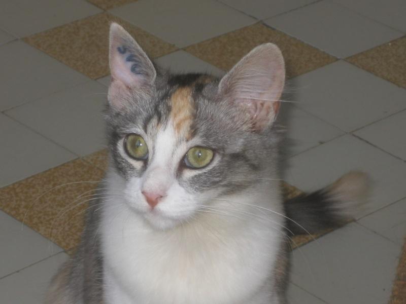 ITSOUKA - F - Née le 01/06/2013 - Adopté en Decembre 2013