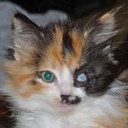 JABBAH - F - Né le 15/08/2014 - Adopté en décembre 2014