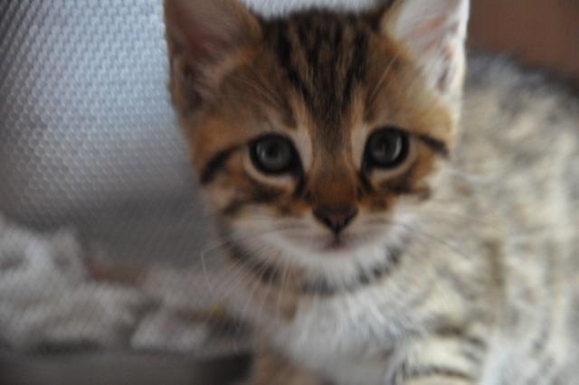 JACK - M - Né le 15/03/2014 - Adopté en Juin 2014
