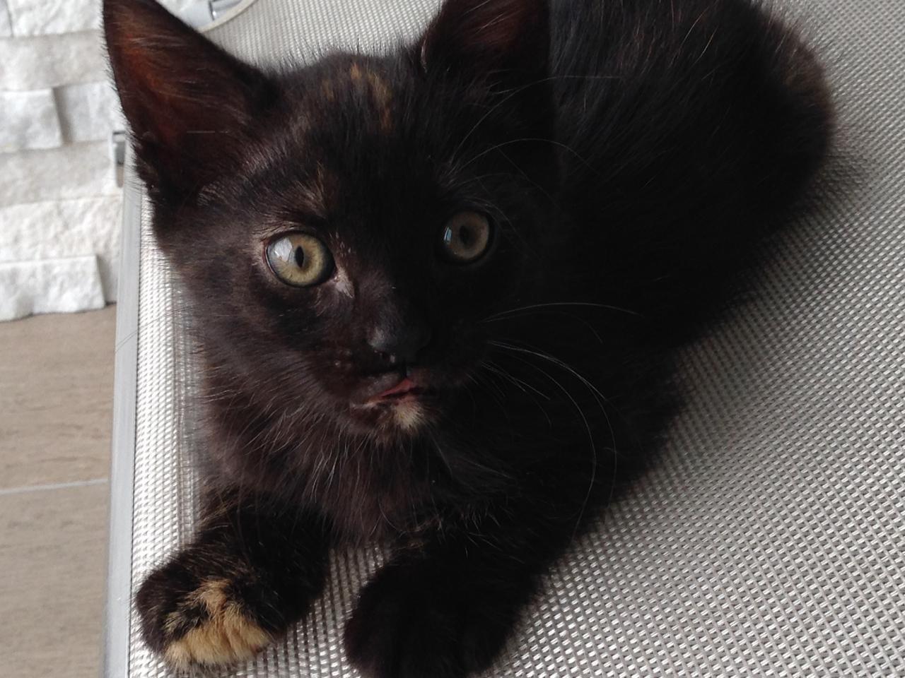 JADE - F - Née le 13/04/2014 - Adoptée en Aout 2014