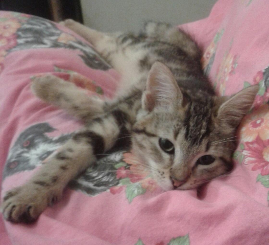 JAELIA - F - Née le 15/09/2014 - Adoptée en décembre