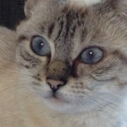 JAHLINE - F - Née le 01/09/2013 - Adoptée en décembre 2014
