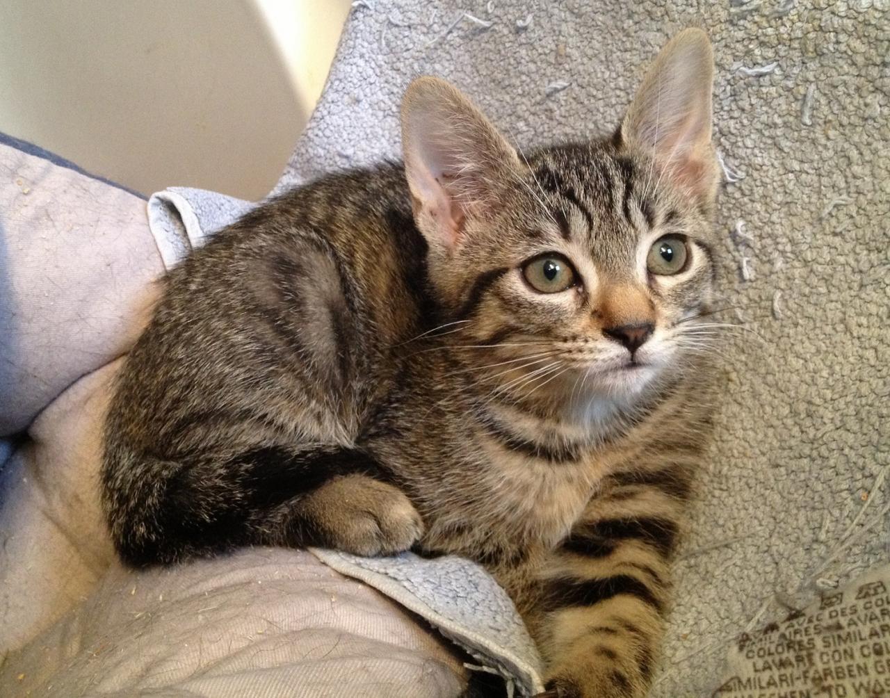 JAKALINE - F - Née le 20/06/2014 - Adoptée en novembre 2014
