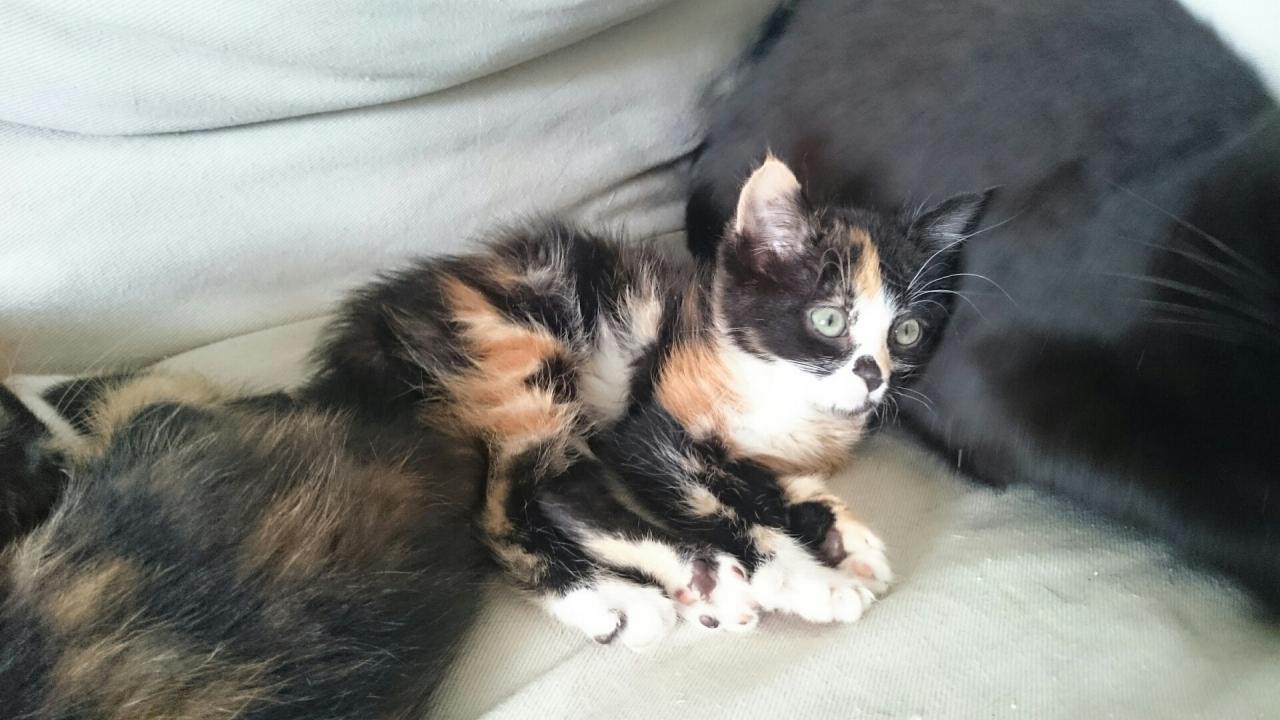 JALINA - F - Née le 01/08/2014 - Adoptée en décembre 2014