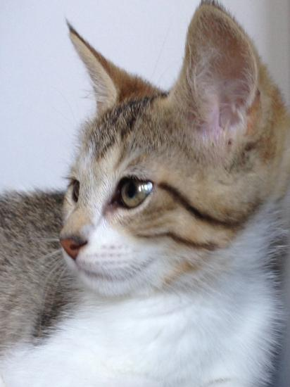 JAM - M - Né le 15/04/2014 - Adopté en Aout 2014