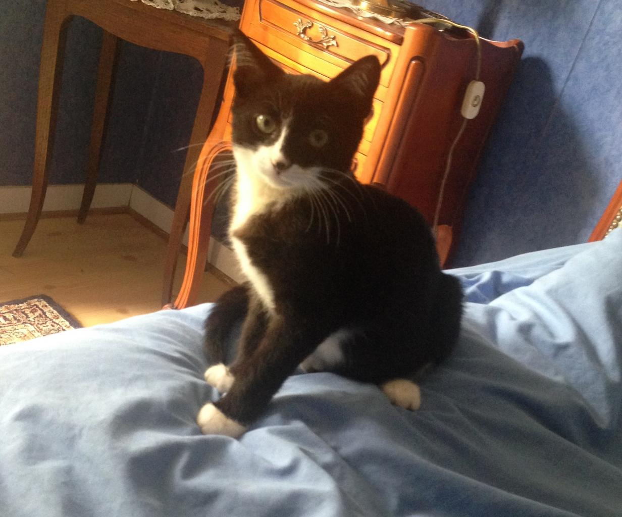 JANAO - M - né le 23/05/2014 - Adopté en Septembre 2014