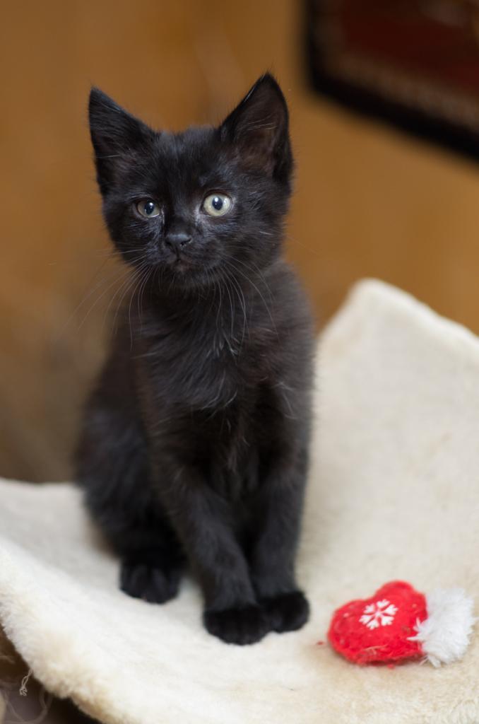 JANESSIA - F - Née le 25/06/2014 - Adoptée en Septembre 2014