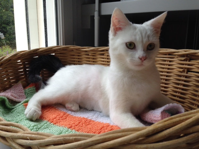 JANNA - F - Née le 01/05/2014 - Adoptée en Octobre 2014