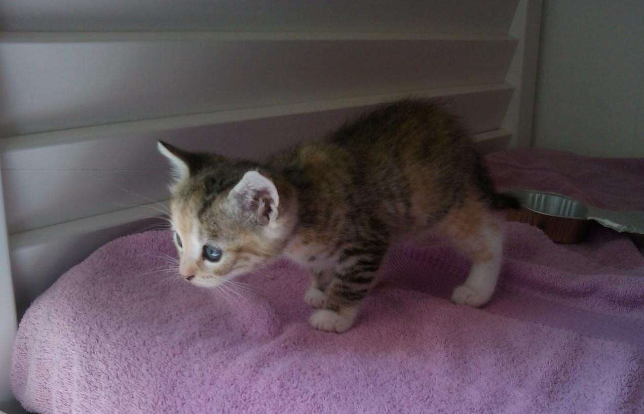 JANABELLE - Née le 15/03/2014 - Adoptée en Juin 2014