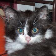 JARAH - F - Né le 15/08/2014 - Adopté en décembre 2014