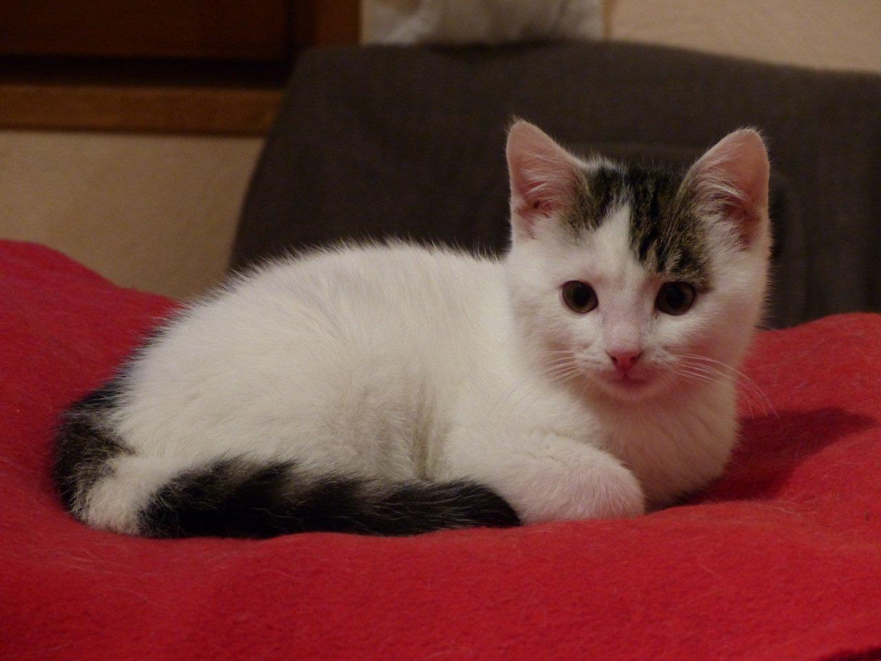 JASKO - M - Né le 01/09/2014 - Adopté en décembre 2014