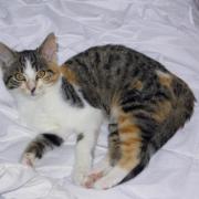 JASMINA - F - Née le 01/05/2014 - Adoptée en novembre 2014