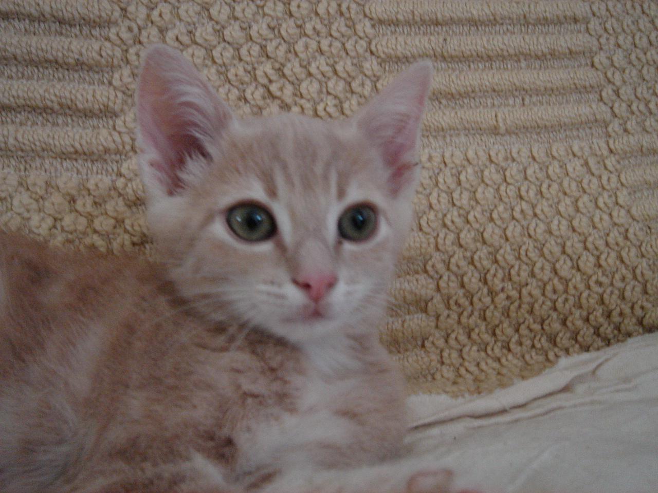 JAYLY - M - Né le 02/05/2014 - Adopté en Septembre 2014