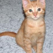 JEEL - M - Né le 15/09/2014 - Adopté en décembre 2014