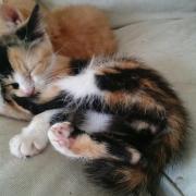 JELINA - F - Née le 01/08/2014 - Adoptée en novembre 2014