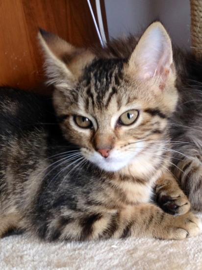 JELLIE - F - Née 15/04/2014 - Adoptée en Septembre 2014