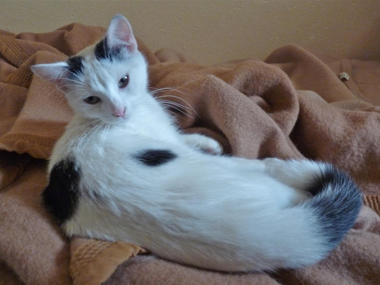 JEMMA - F - Née le 15/04/2014 - Adoptée en novembre 2014