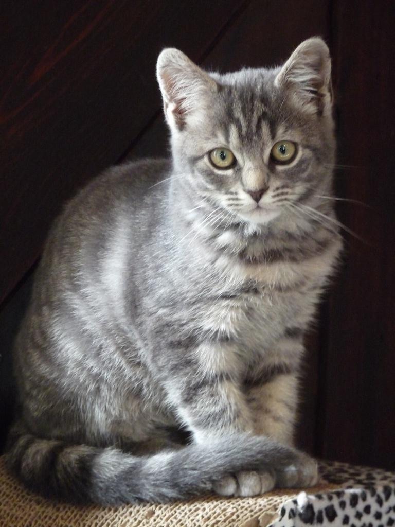 JERRY - F - née en 02/2014 - Adoptée en Mai 2014