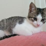 JIJIE - F - Née le 15/11/2014 - Adoptée en avril 2015