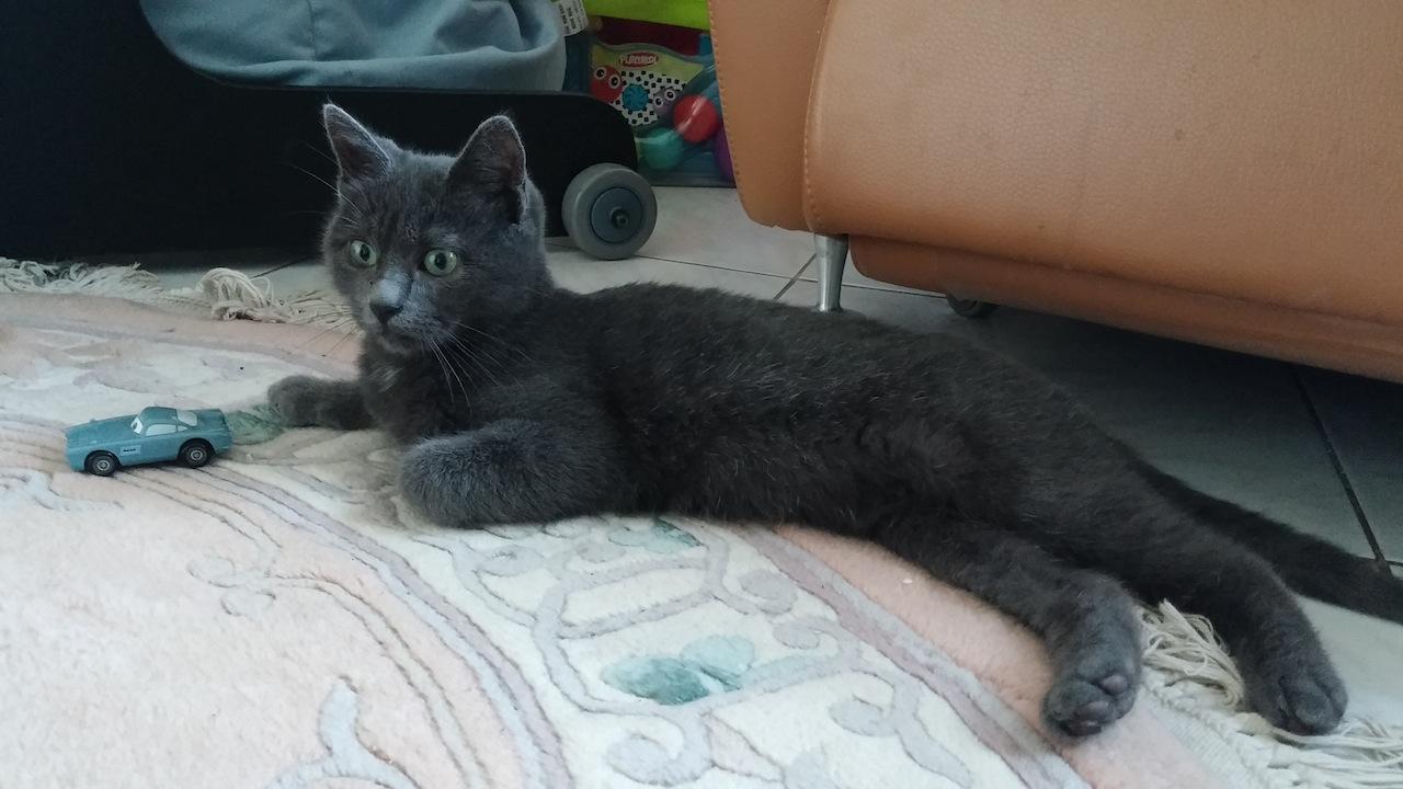 JILL - M - Né le 01/02/2014 - Adopté en juin 2015