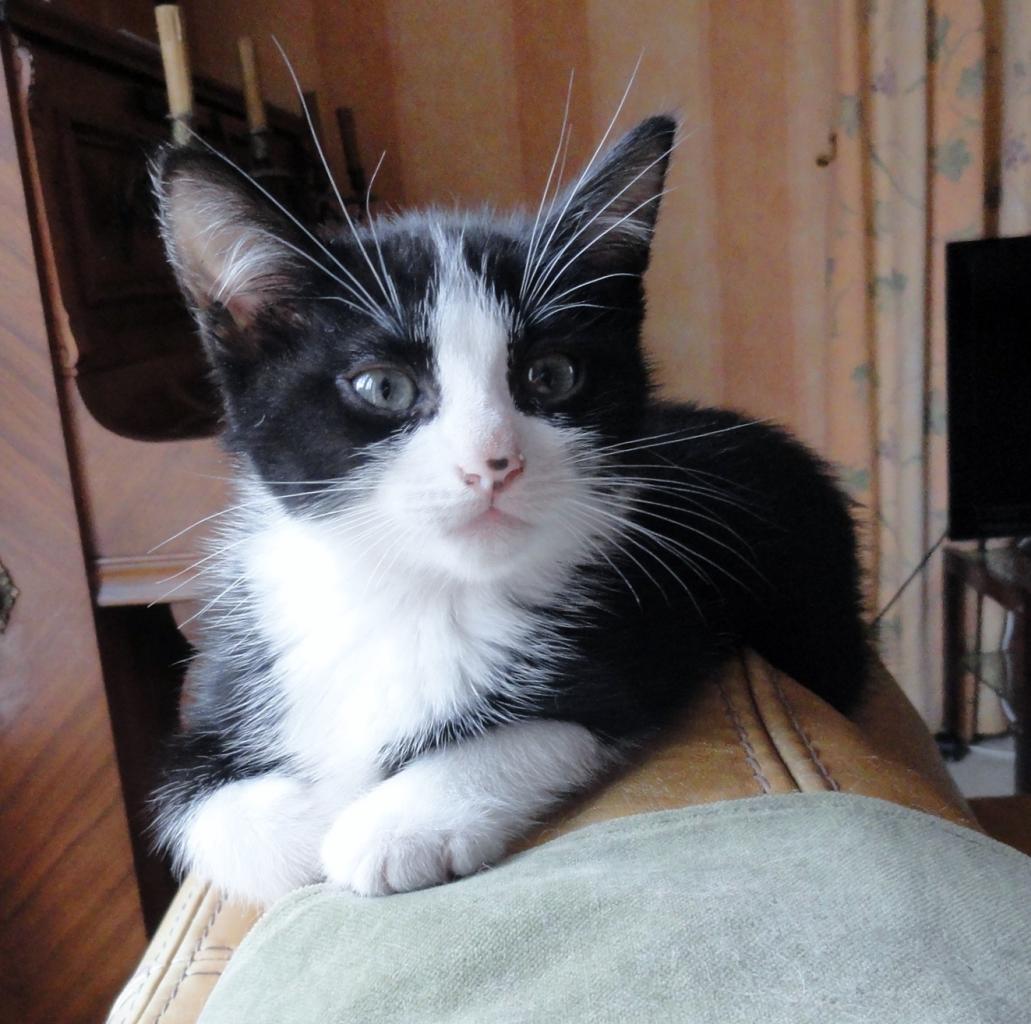 JILOU - M - Né le 25/03/2014  - Adopté Juin 2014
