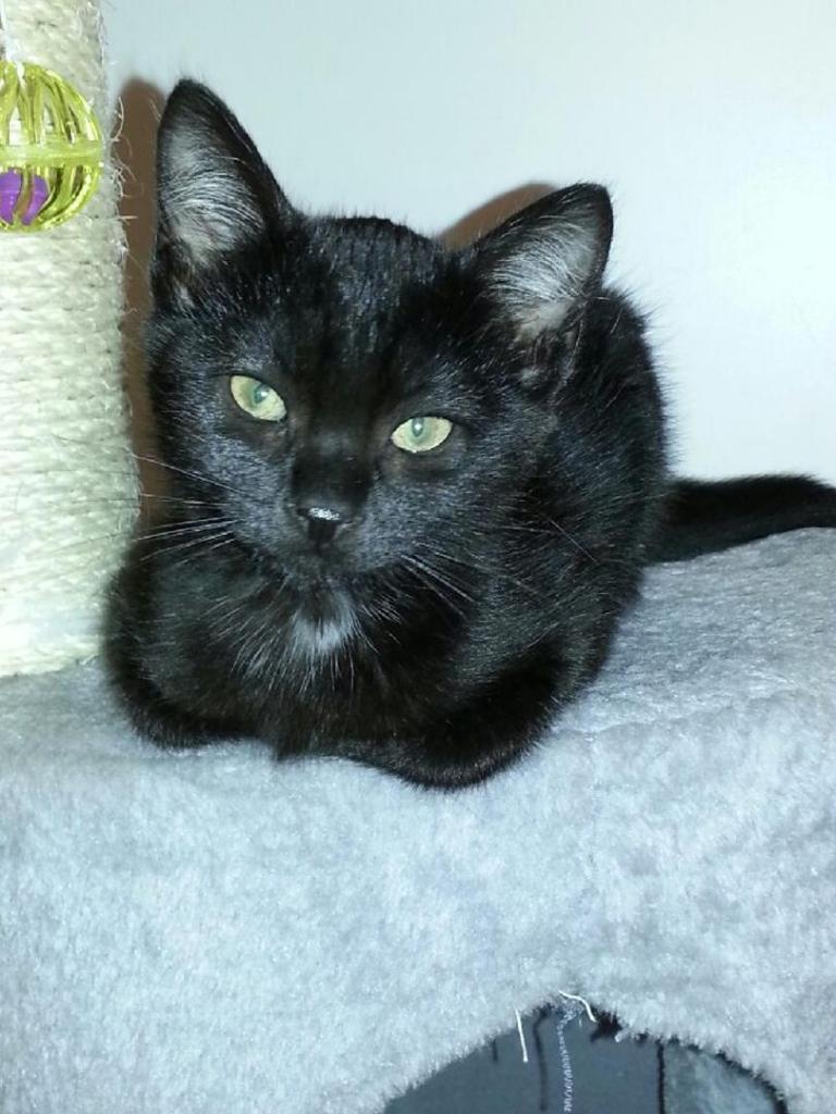 JIMBA - M - Né le 10/09/14 - Adopté en février 2015