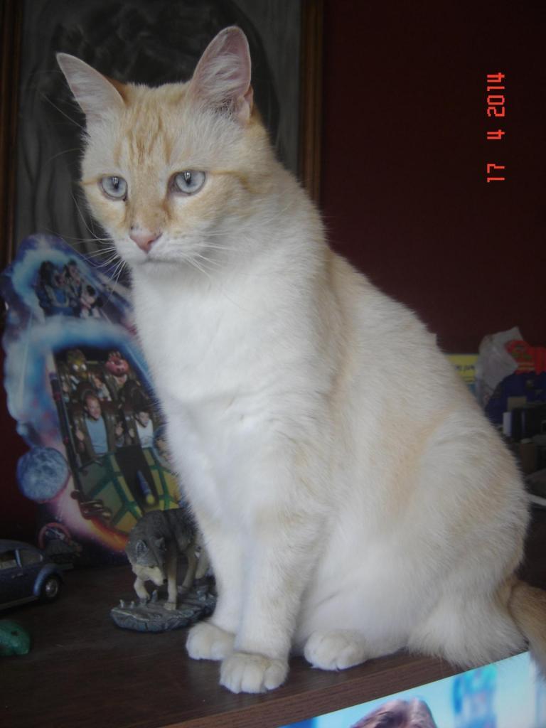 JIMINI - M - Né le 17/04/2009 - Adopté en Mai 2014