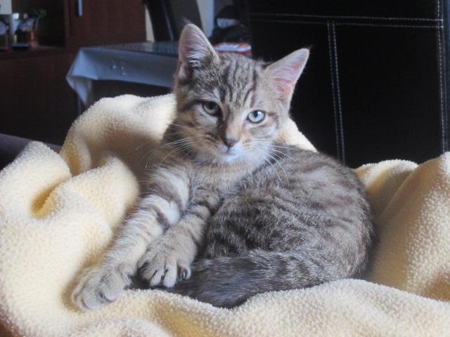 JINA - F - Née le 15/05/2015 - Adoptée en Aout 2014