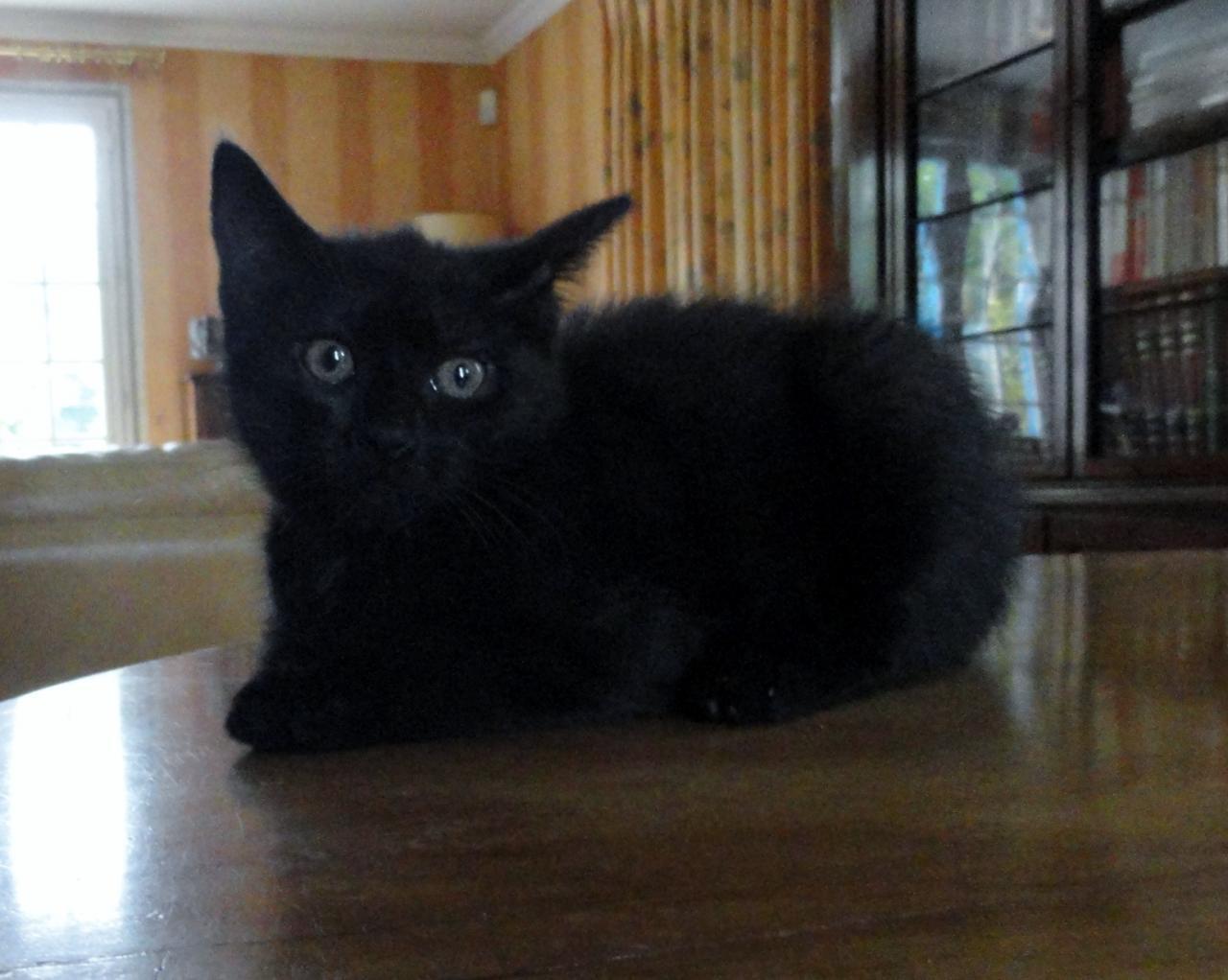 JINN - f - Née le 25/03/2014  - Adoptée Juin 2014