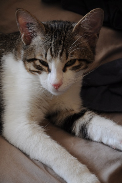 JO - M - né le 01/07/2013 - Adopté en Avril 2014