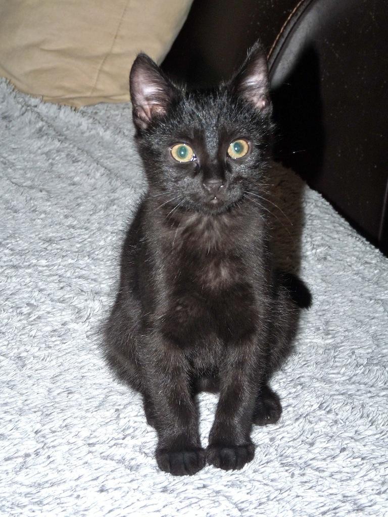 JOBBY - M - Né le 15/09/2014 - Adopté en décembre 2014