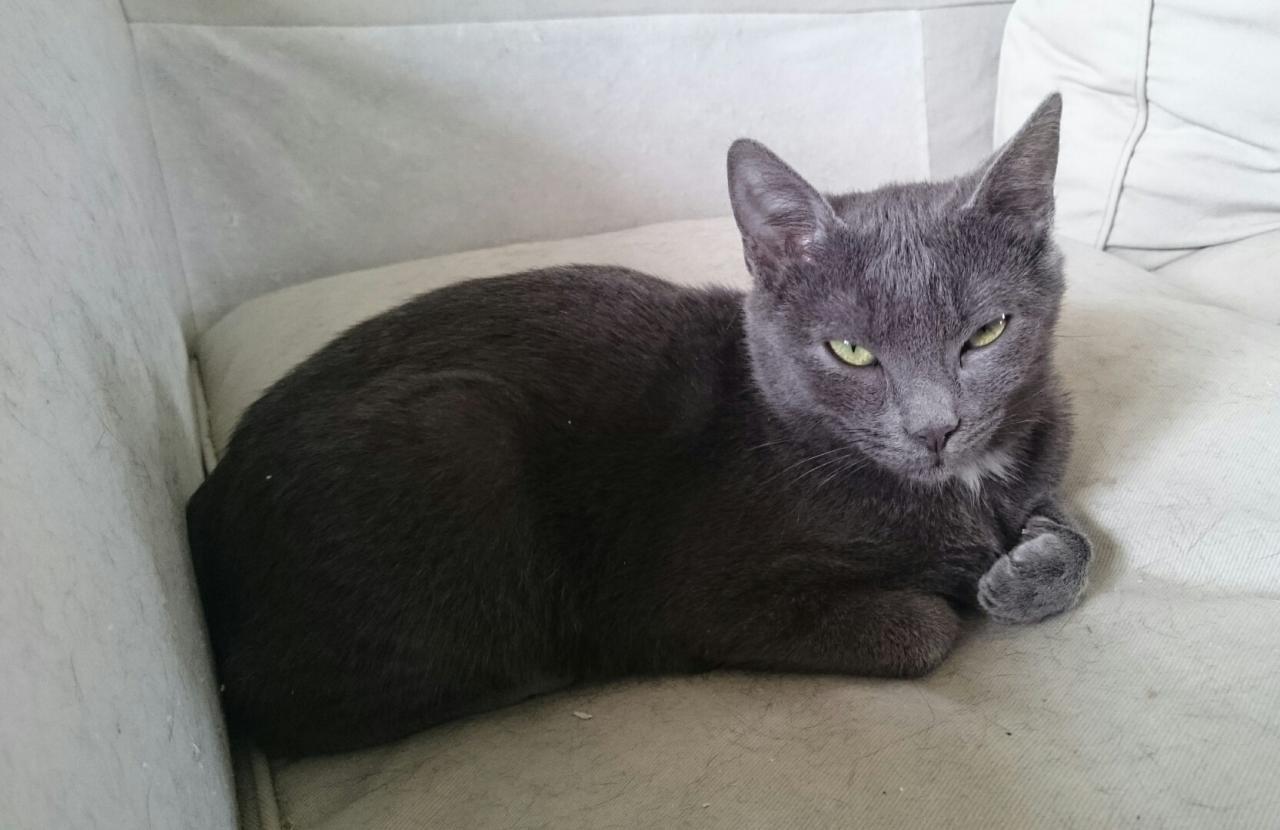 JOCKO - M - Né le 01/05/2014 - Adopté en novembre 2014