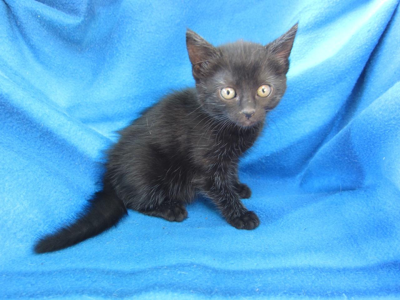 JOELINE - Née le 10/06/2014 - Adoptée en décembre 2014