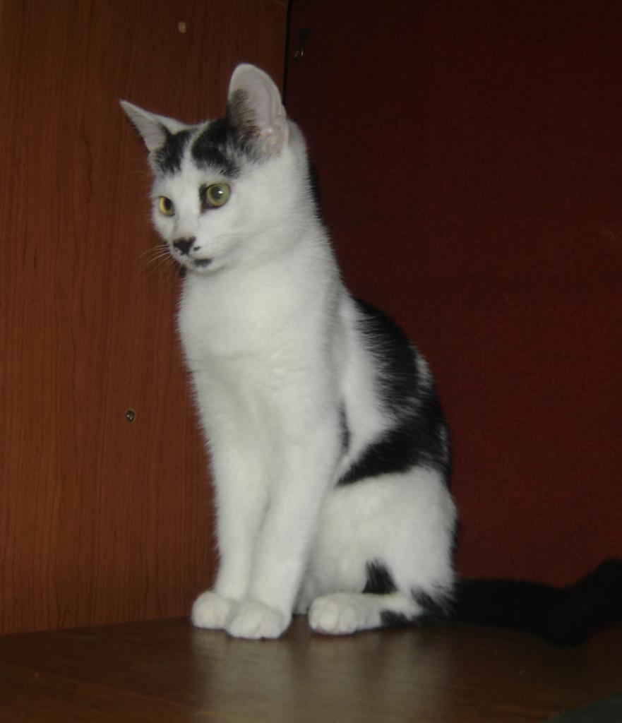JONHSON - M - Né le 25/05/2014 - Adopté en février 2015