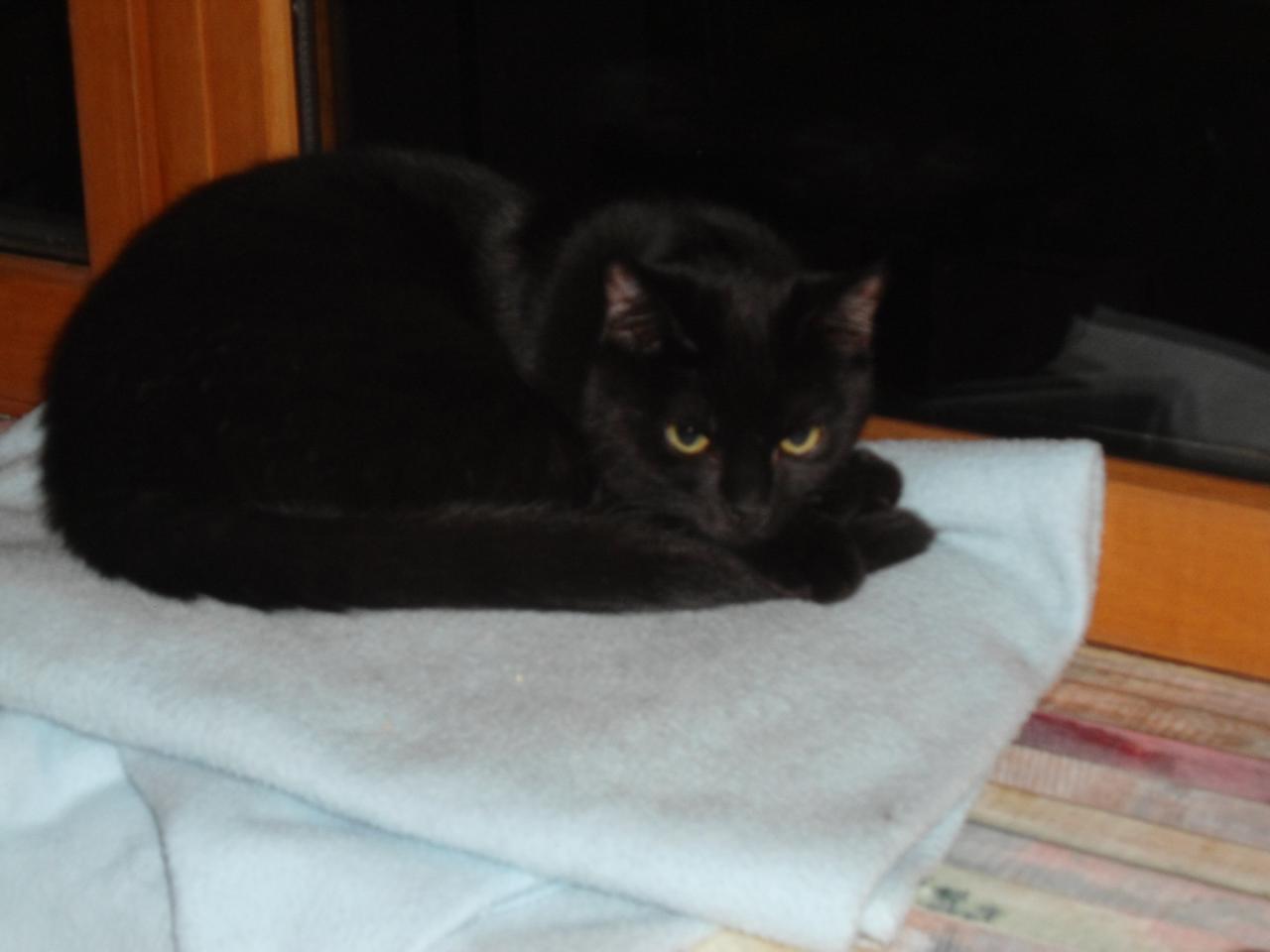 JOLANE - F - Née le 15/05/2014 - Adoptée en décembre 2014