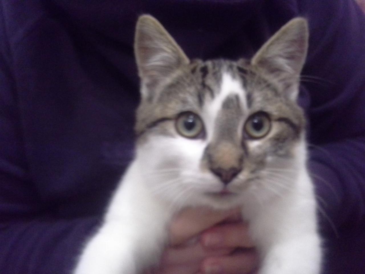 JUCUBE - M - Né le 17/04/2014 - Adopté en novembre 2014