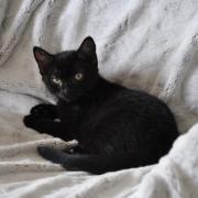 JUDIE - F - Née le 22/06/2014 - Adoptée en décembre 2014