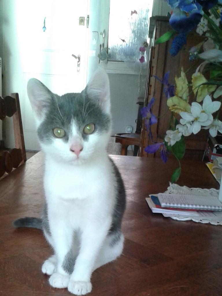 JULIEN - M - Né le 15/09/2014 - Adopté en janvier 2015