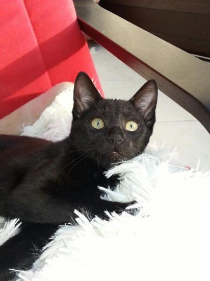 JUNKO - M - Né le 10/09/2014 - Adopté en janvier 2015