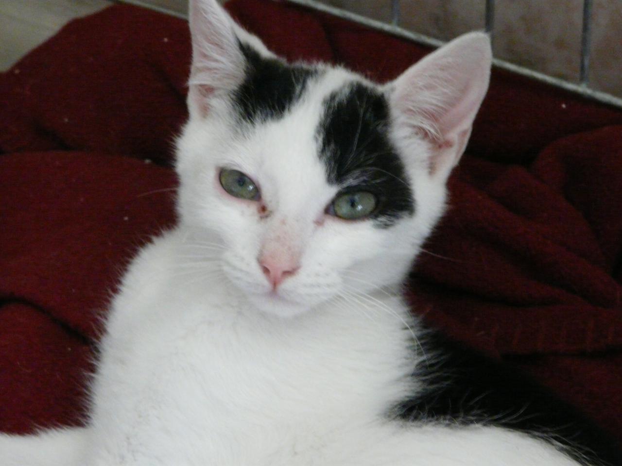 JUPITER - M - Né le 01/05/2014 - Adopté en Octobre 2014