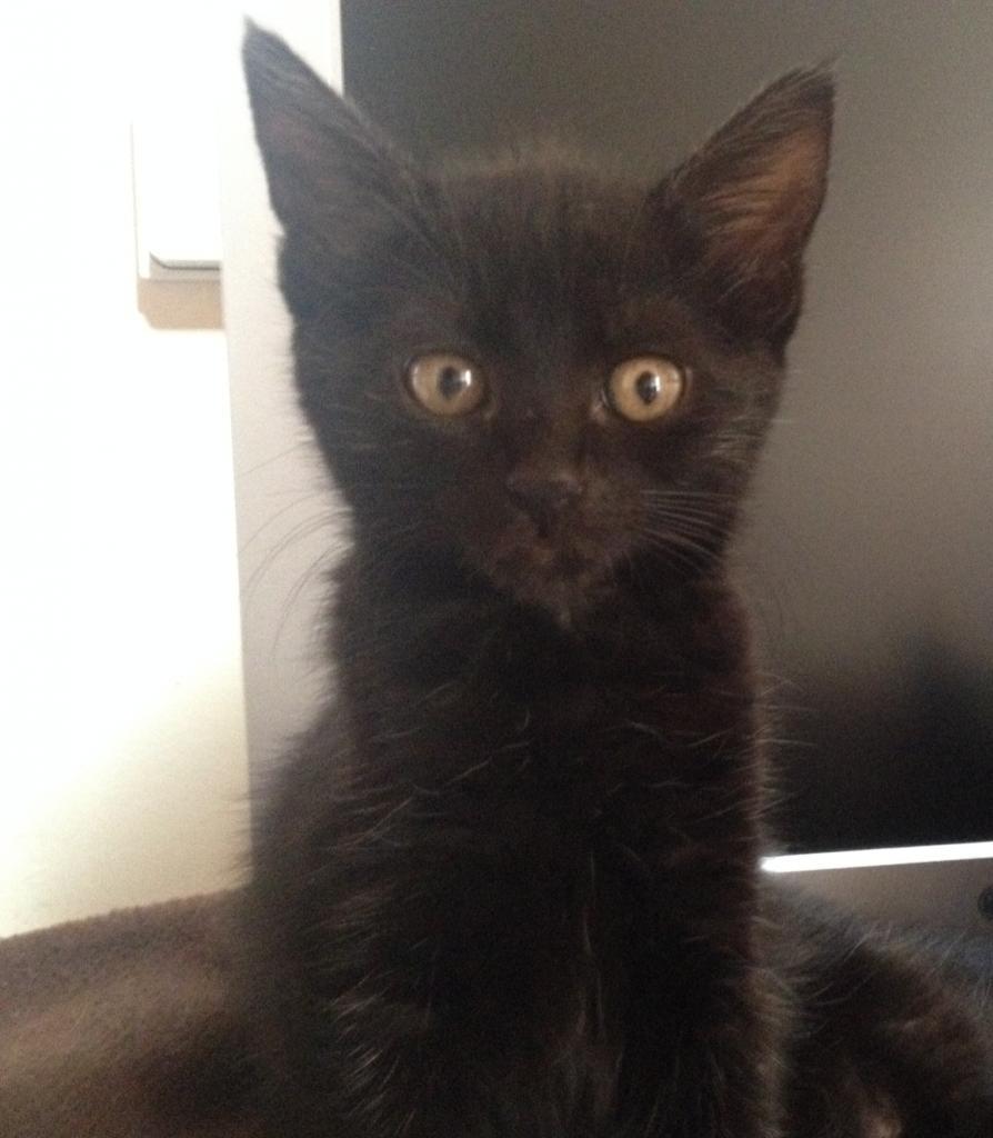 JUSTINE  - F - Née le 10/06/2014 - Adoptée en décembre 2014