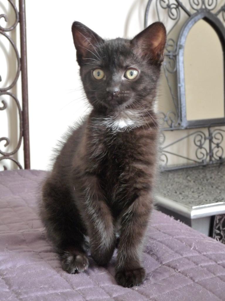 JUSTY - F - Née le 01/05/2014 - Adoptée en Septembre 2014